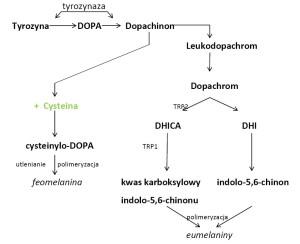 Melanogeneza